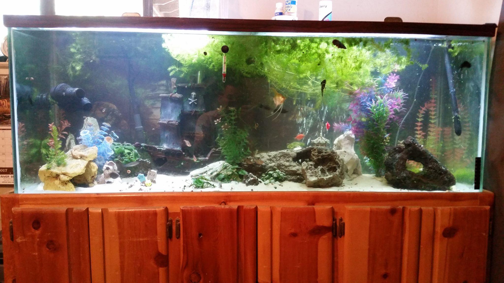 clean-fish-aquarium-service
