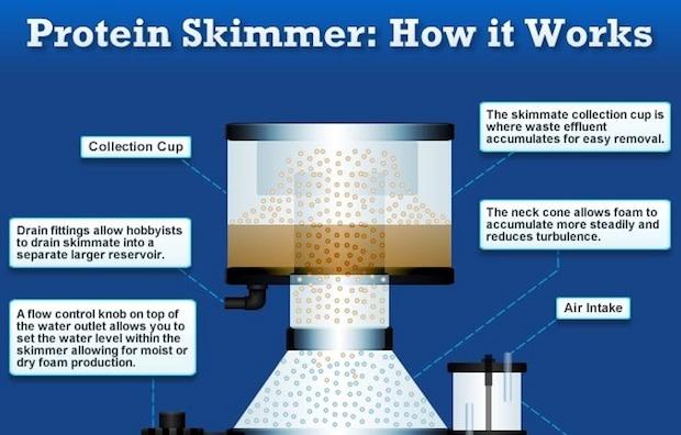 skimmer-fishtank-saltwater-aquarium