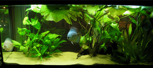 new freshwater aquarium