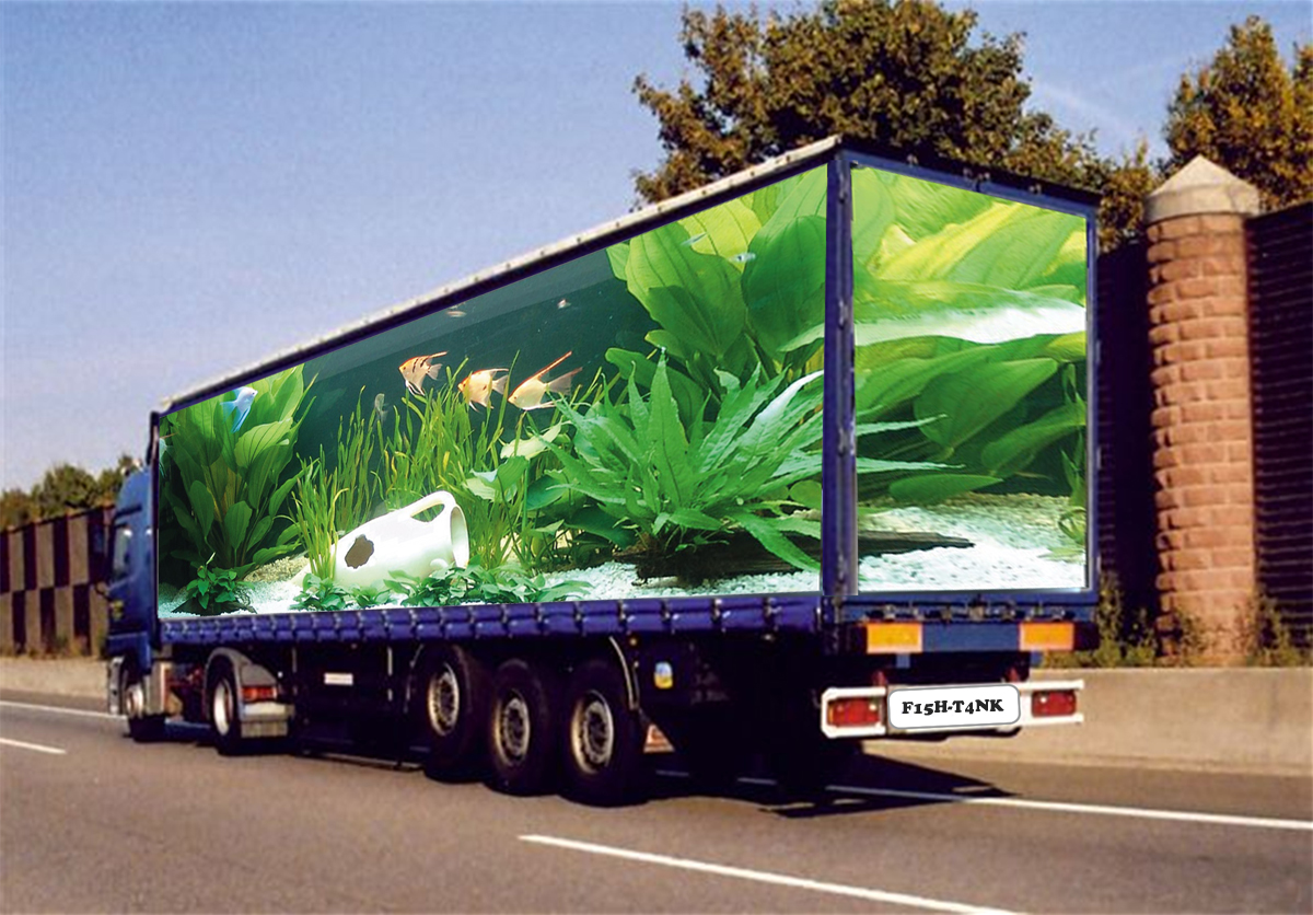 moving-fish-tank-aquarium