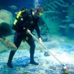 aquarium-clean-service