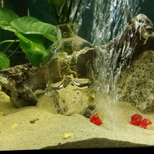 aquarium-cleaning-sacramento-service