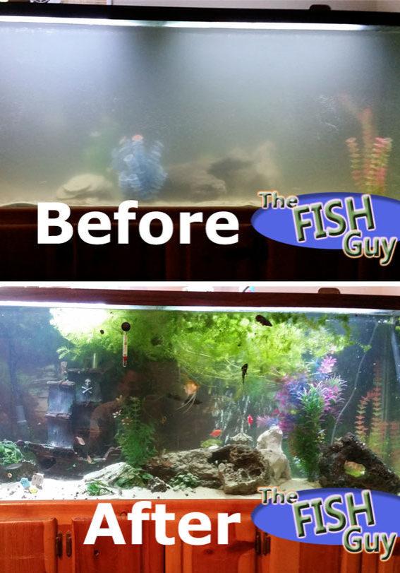 sacramento-fish-tank