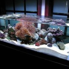 nice-home-cichlid-aquariums