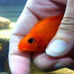 sacramento-aquarium-service-fishtanks